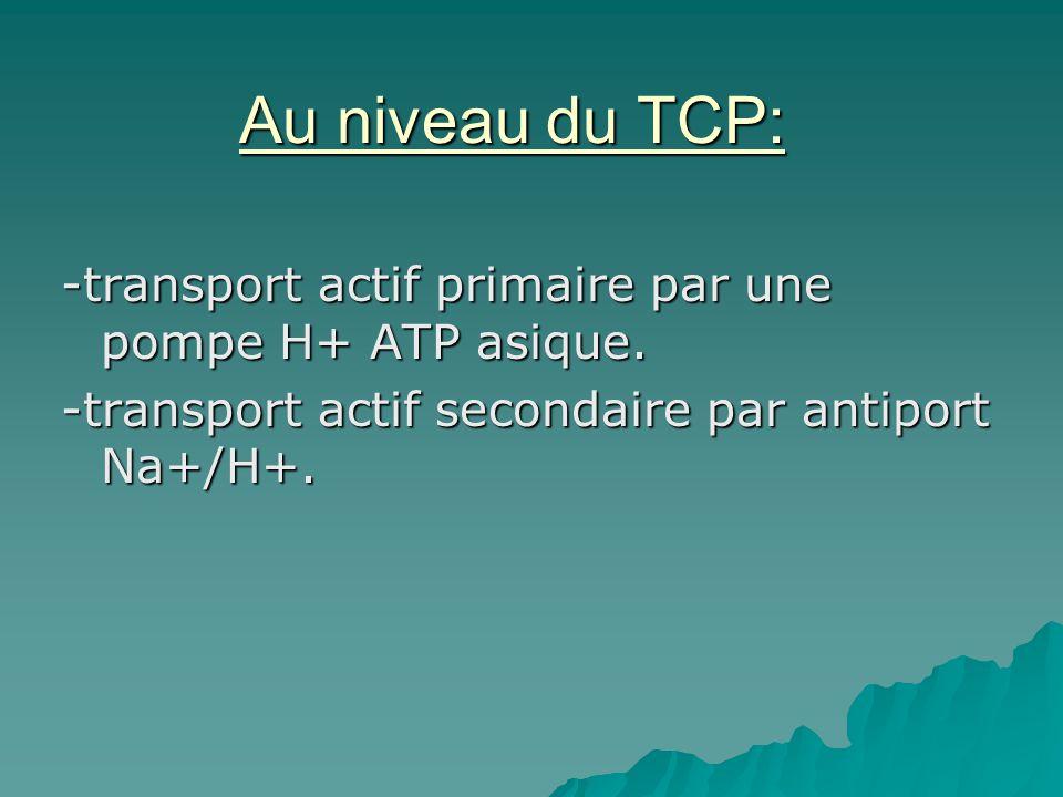 Au niveau du TCP: -transport actif primaire par une pompe H+ ATP asique.