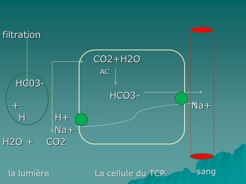 filtration CO2+H2O AC HC03- HCO3- + Na+ H H+ Na+ H2O + CO2