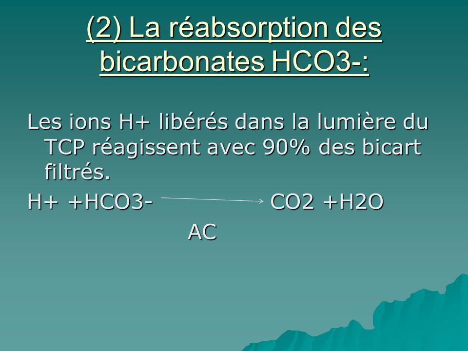 (2) La réabsorption des bicarbonates HCO3-: