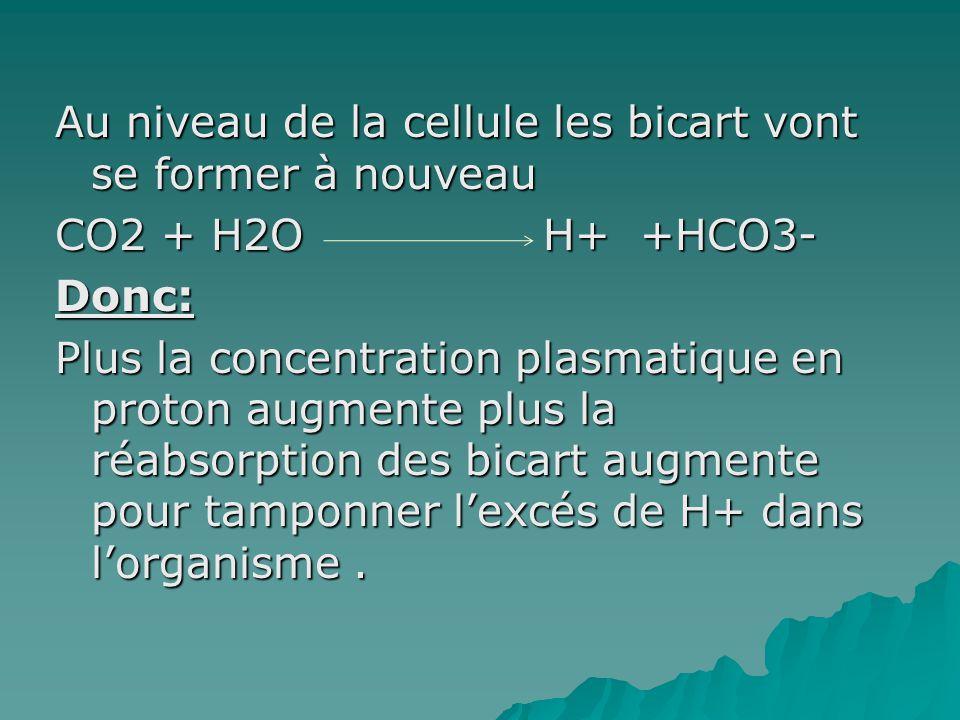 Au niveau de la cellule les bicart vont se former à nouveau CO2 + H2O H+ +HCO3- Donc: Plus la concentration plasmatique en proton augmente plus la réabsorption des bicart augmente pour tamponner l'excés de H+ dans l'organisme .
