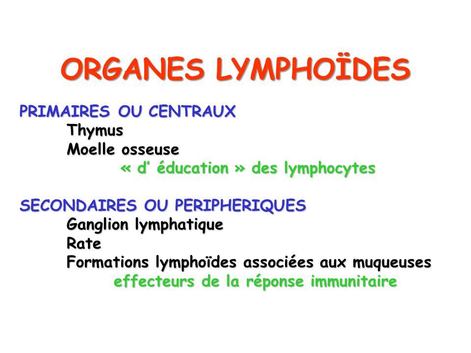 ORGANES LYMPHOÏDES PRIMAIRES OU CENTRAUX Thymus Moelle osseuse