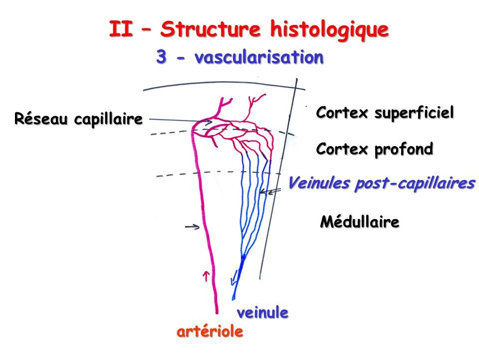 II – Structure histologique