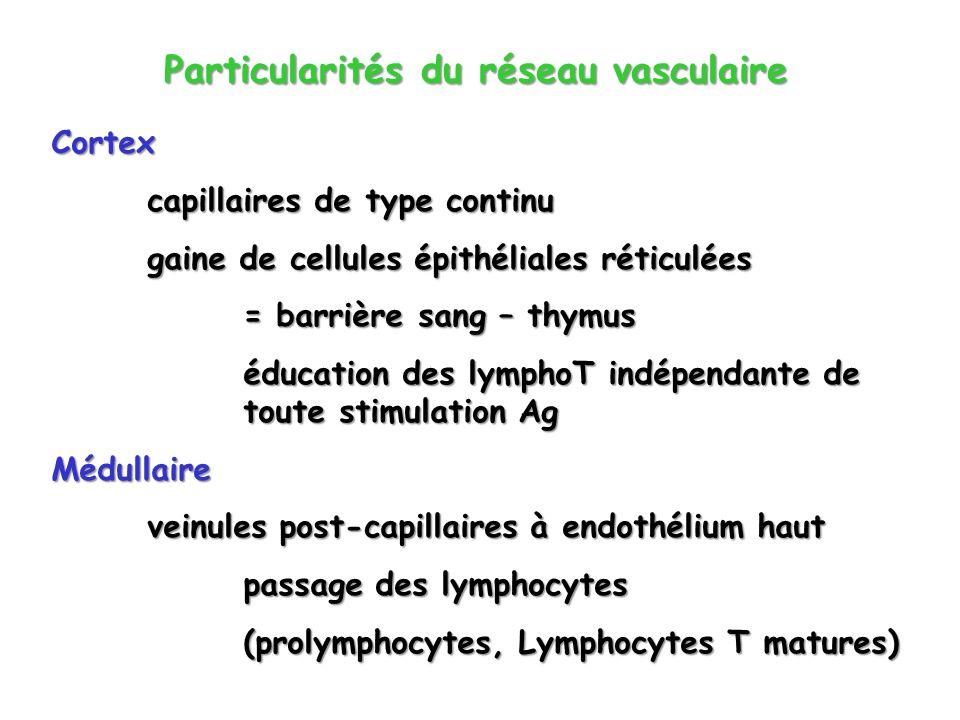 Particularités du réseau vasculaire