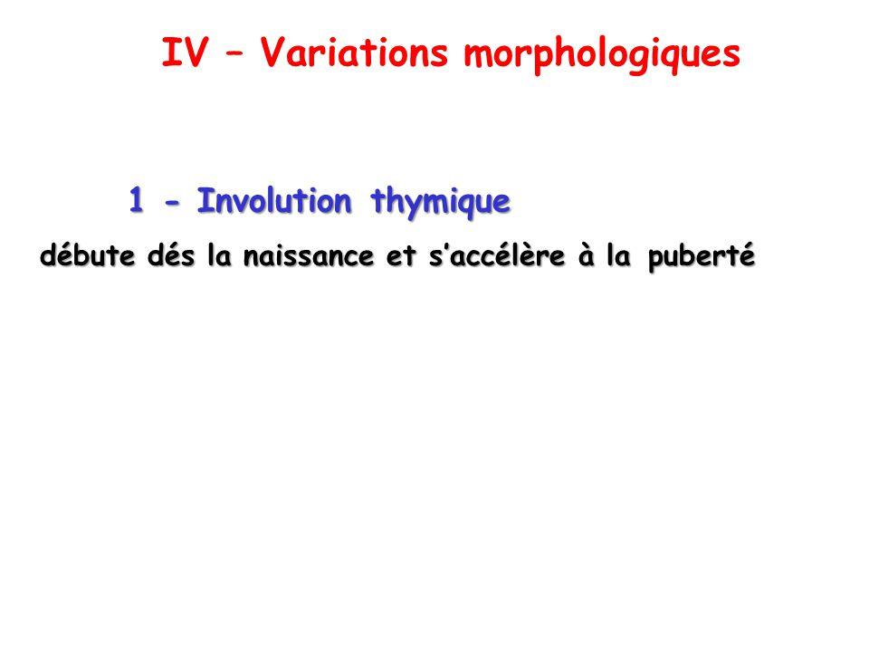 IV – Variations morphologiques