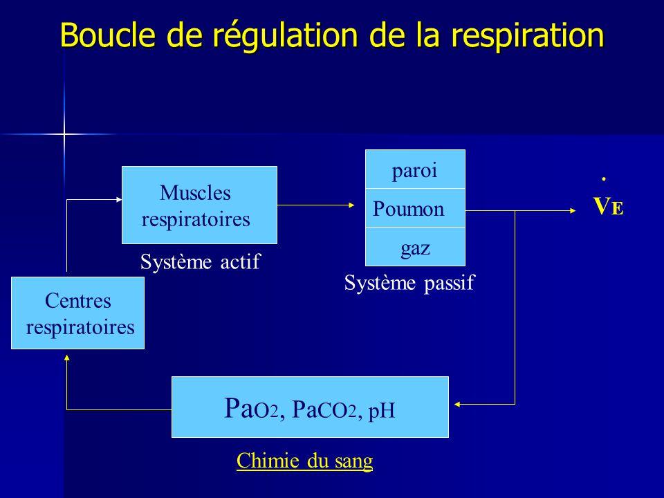 Boucle de régulation de la respiration