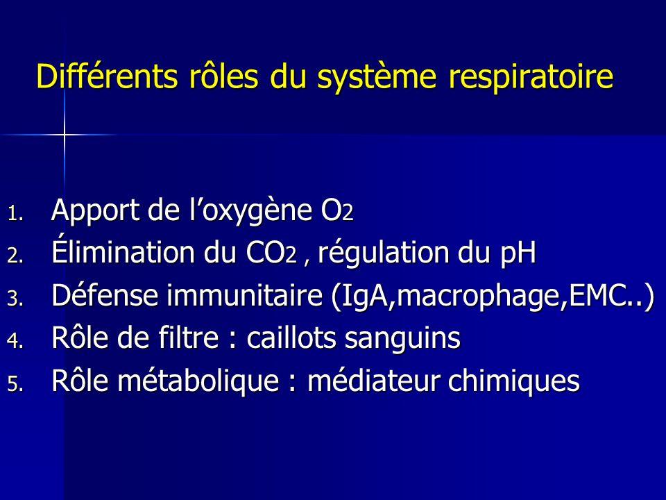 Différents rôles du système respiratoire