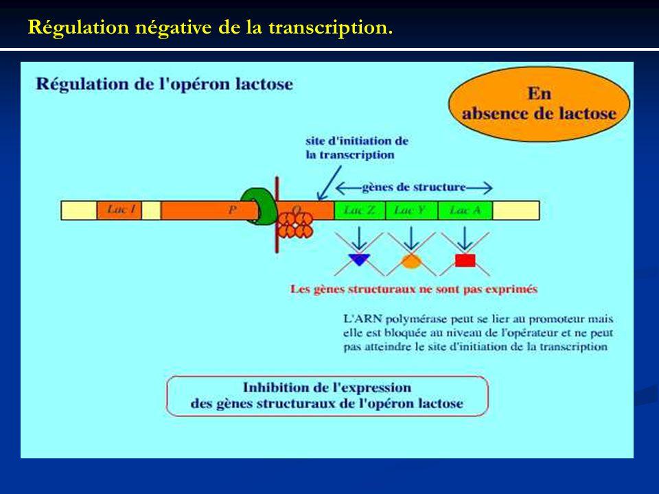 Régulation négative de la transcription.