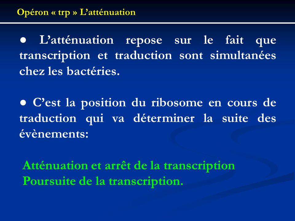 Atténuation et arrêt de la transcription