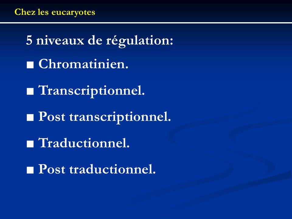 5 niveaux de régulation: ■ Chromatinien. ■ Transcriptionnel.