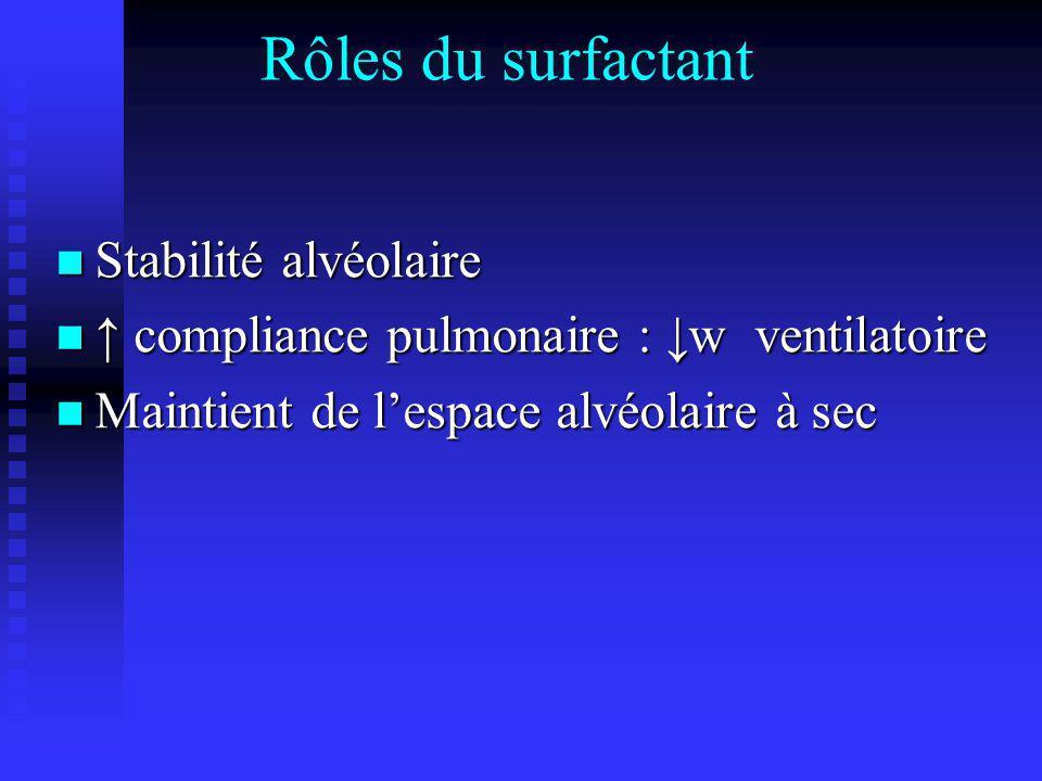 Rôles du surfactant Stabilité alvéolaire