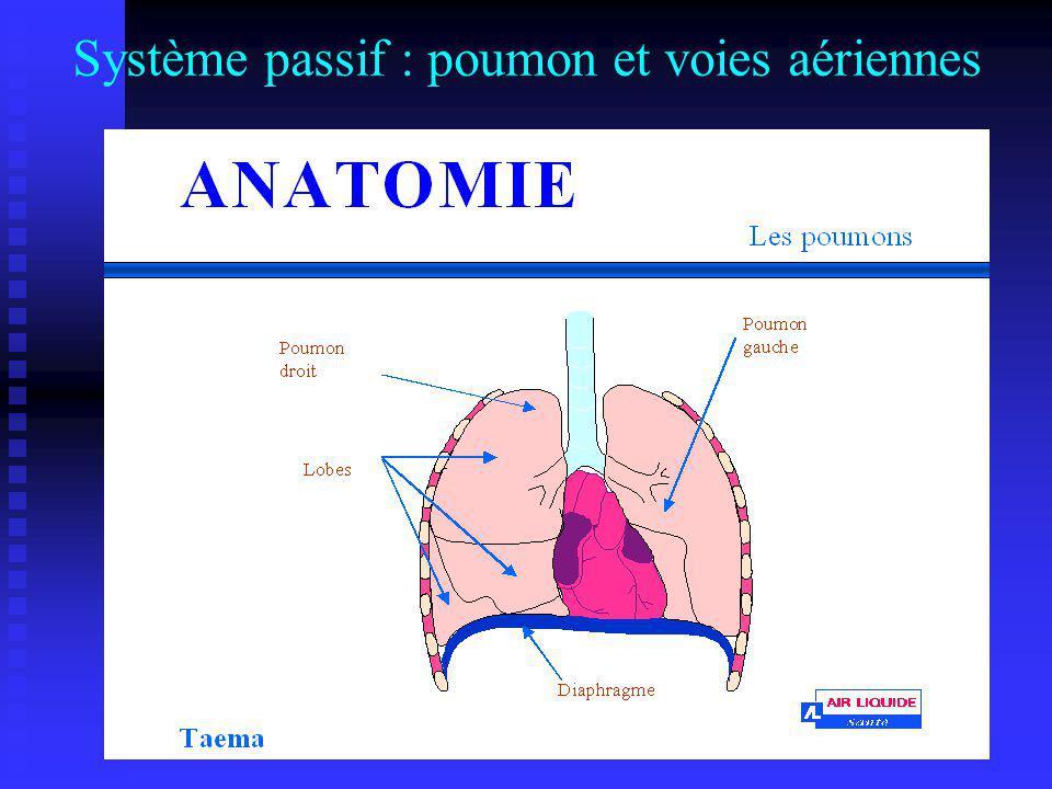 Système passif : poumon et voies aériennes