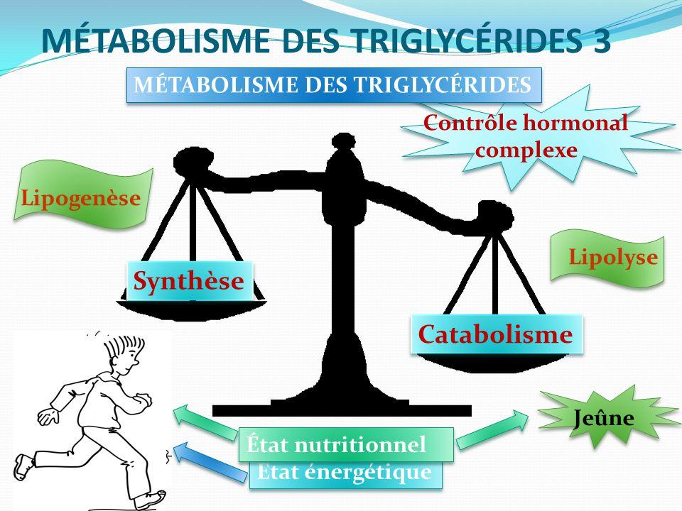 MÉTABOLISME DES TRIGLYCÉRIDES 3