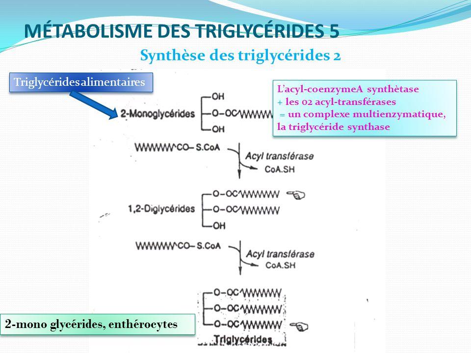 MÉTABOLISME DES TRIGLYCÉRIDES 5