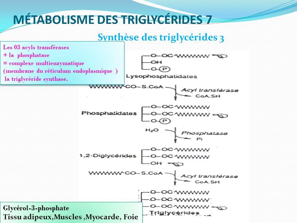 MÉTABOLISME DES TRIGLYCÉRIDES 7