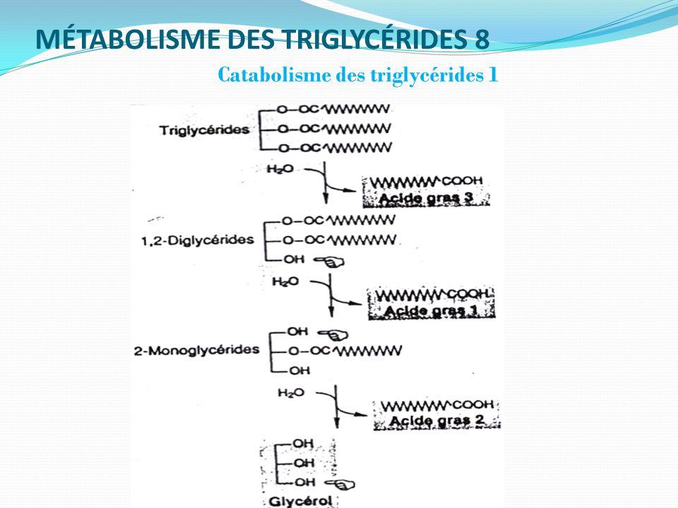 MÉTABOLISME DES TRIGLYCÉRIDES 8
