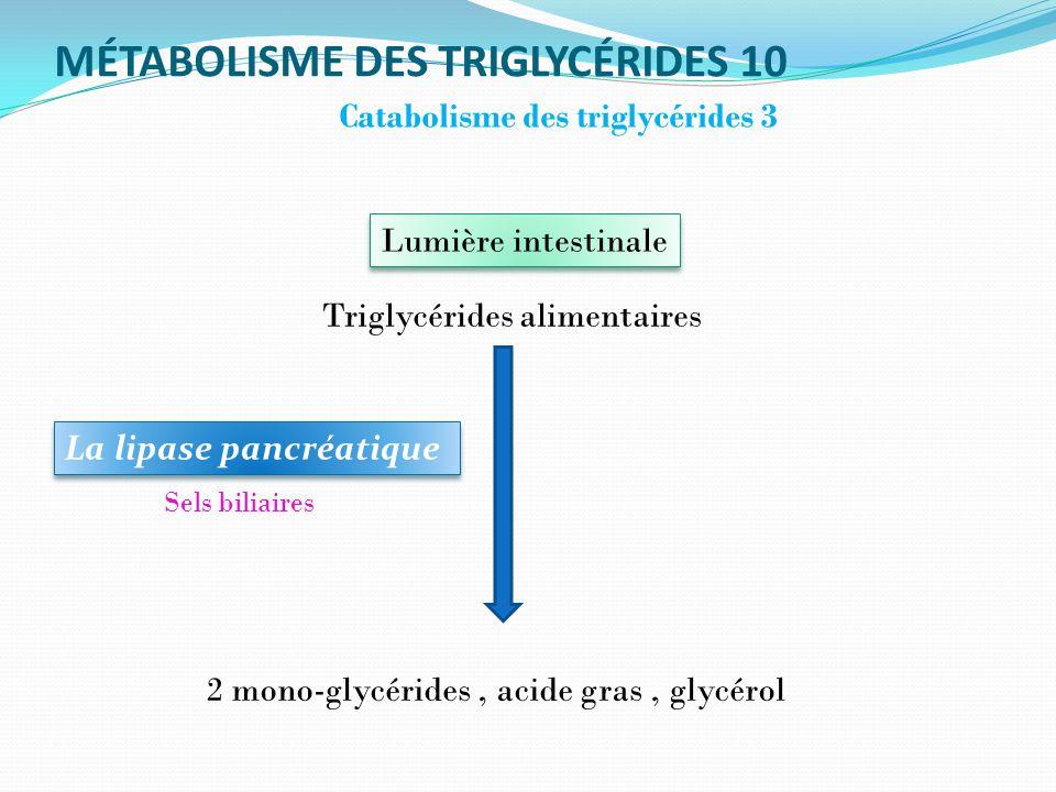 MÉTABOLISME DES TRIGLYCÉRIDES 10