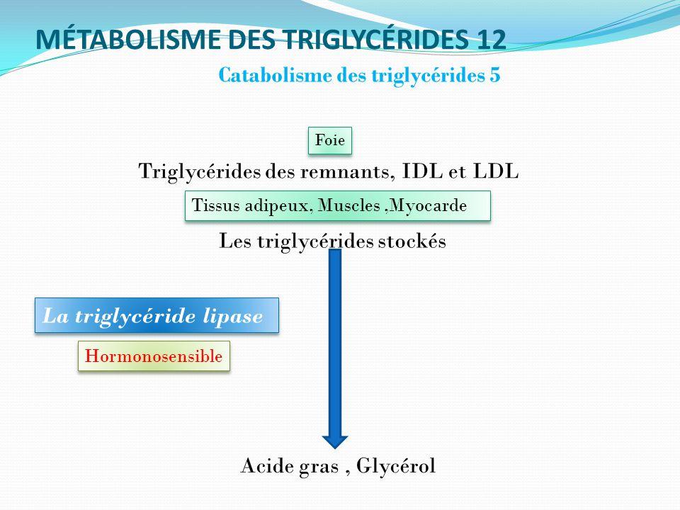 MÉTABOLISME DES TRIGLYCÉRIDES 12