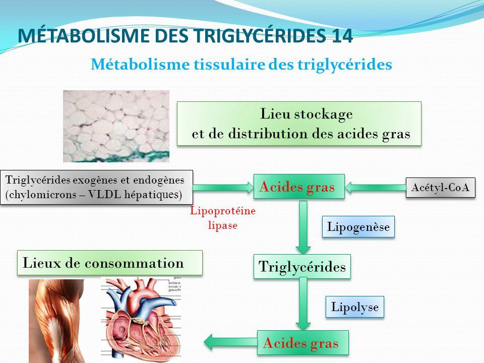 MÉTABOLISME DES TRIGLYCÉRIDES 14