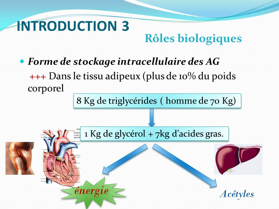 INTRODUCTION 3 énergie Rôles biologiques Acétyles