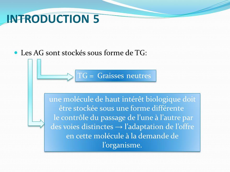INTRODUCTION 5 Les AG sont stockés sous forme de TG: