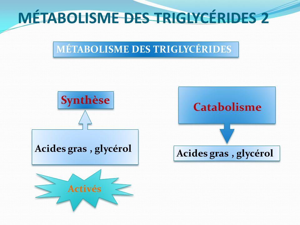 MÉTABOLISME DES TRIGLYCÉRIDES 2