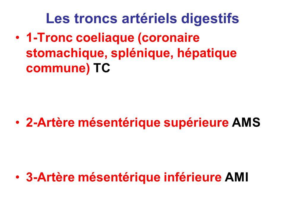 Les troncs artériels digestifs