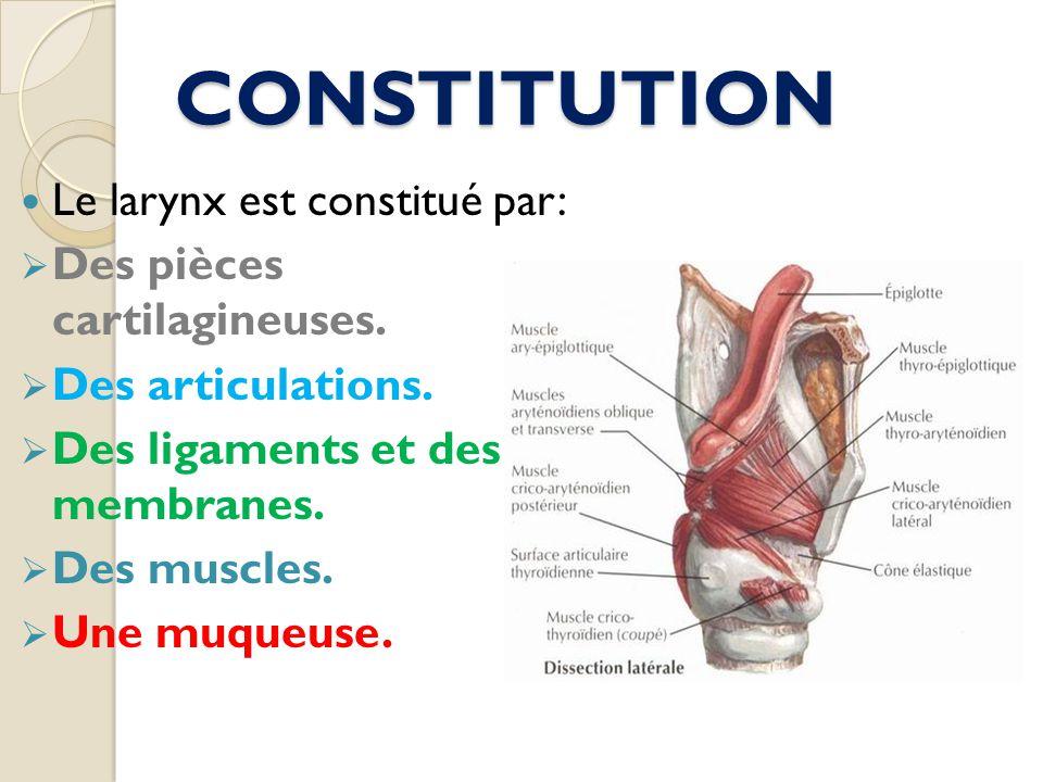 CONSTITUTION Le larynx est constitué par: Des pièces cartilagineuses.