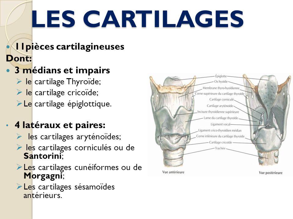 LES CARTILAGES 11pièces cartilagineuses Dont: 3 médians et impairs