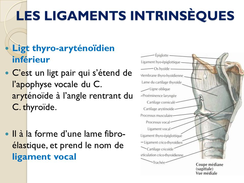 LES LIGAMENTS INTRINSÈQUES