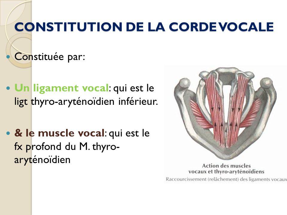 CONSTITUTION DE LA CORDE VOCALE