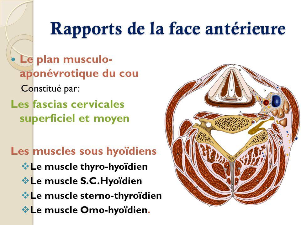 Rapports de la face antérieure