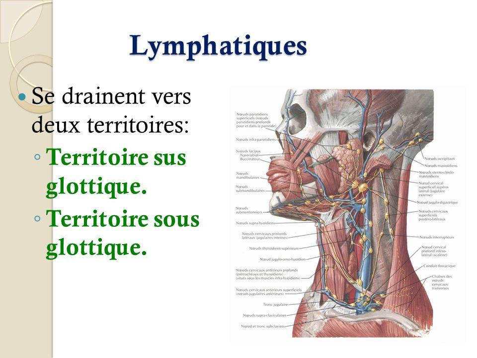 Lymphatiques Se drainent vers deux territoires: