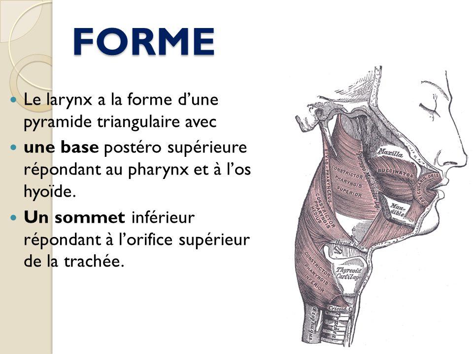 FORME Le larynx a la forme d'une pyramide triangulaire avec