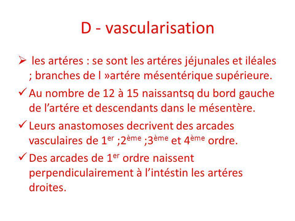 D - vascularisation les artéres : se sont les artéres jéjunales et iléales ; branches de l »artére mésentérique supérieure.
