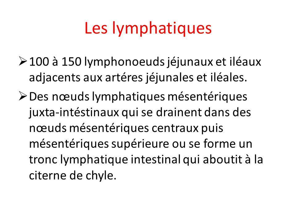 Les lymphatiques 100 à 150 lymphonoeuds jéjunaux et iléaux adjacents aux artéres jéjunales et iléales.