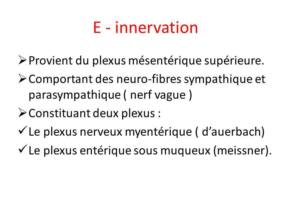 E - innervation Provient du plexus mésentérique supérieure.