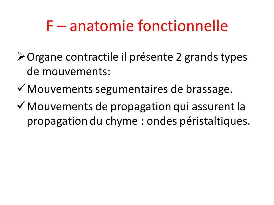 F – anatomie fonctionnelle