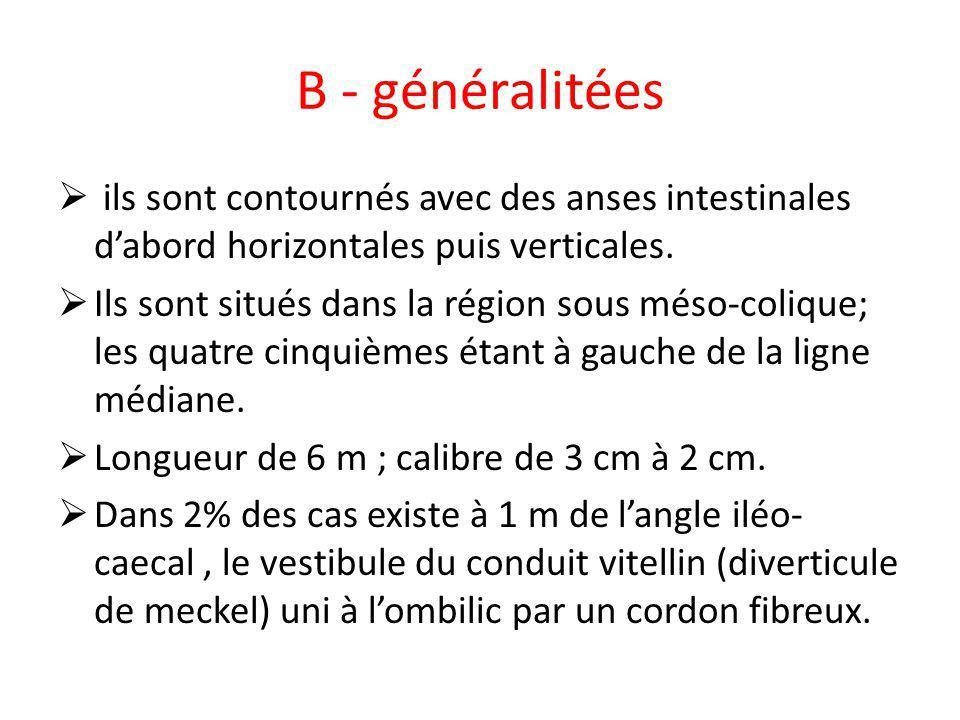 B - généralitées ils sont contournés avec des anses intestinales d'abord horizontales puis verticales.
