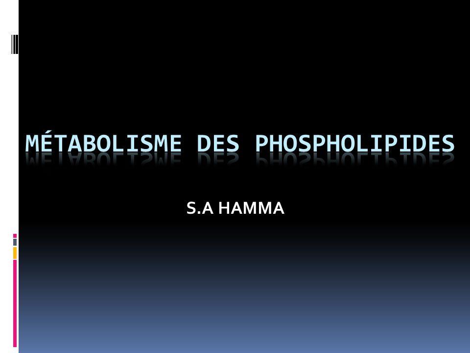 Métabolisme des phospholipides