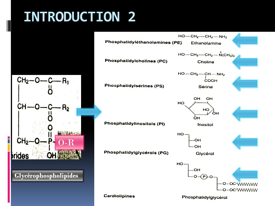 INTRODUCTION 2 O-R Glycérophospholipides