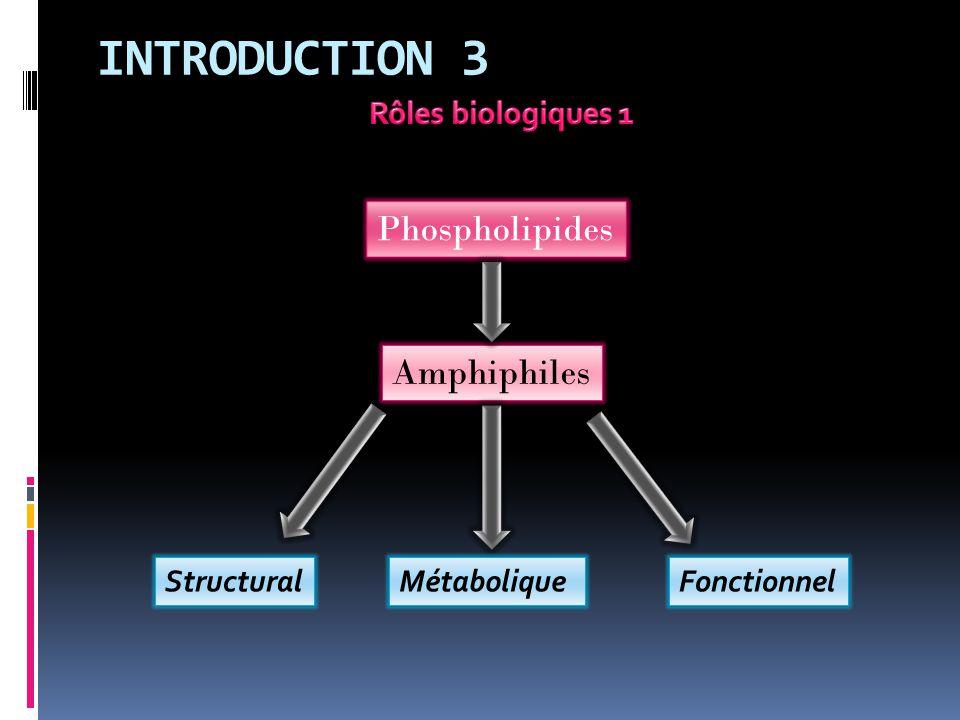 INTRODUCTION 3 Phospholipides Amphiphiles Rôles biologiques 1