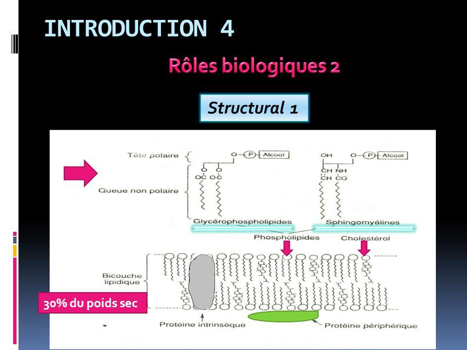 INTRODUCTION 4 Rôles biologiques 2 Structural 1 30% du poids sec
