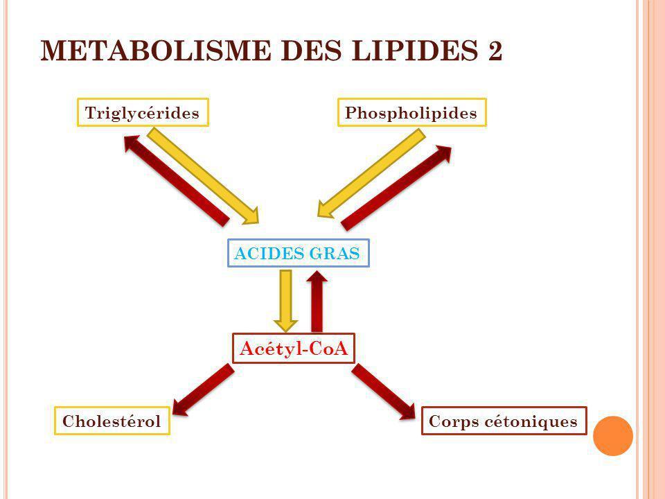 METABOLISME DES LIPIDES 2