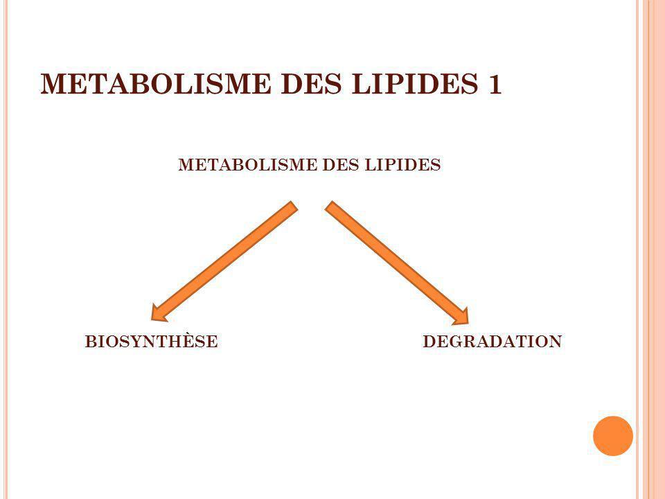 METABOLISME DES LIPIDES 1