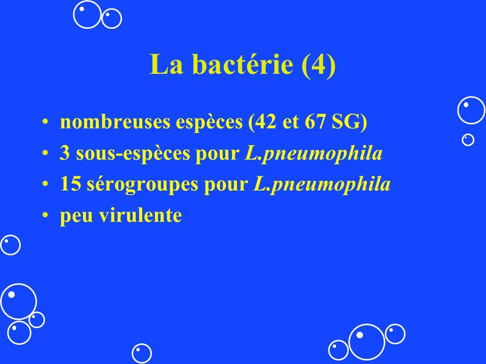 La bactérie (4) nombreuses espèces (42 et 67 SG)