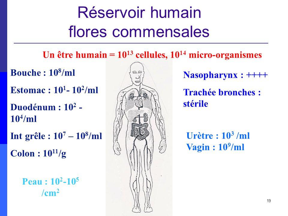 Réservoir humain flores commensales