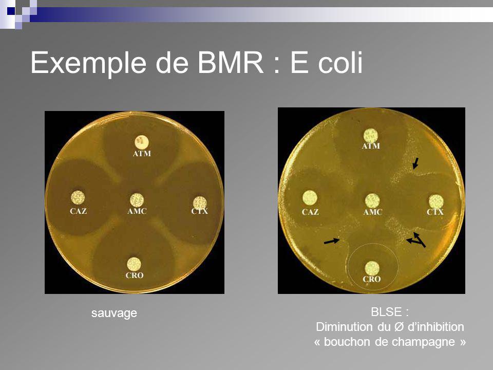 Exemple de BMR : E coli sauvage BLSE : Diminution du Ø d'inhibition