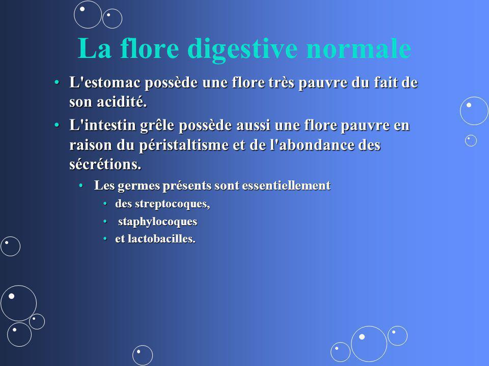 La flore digestive normale