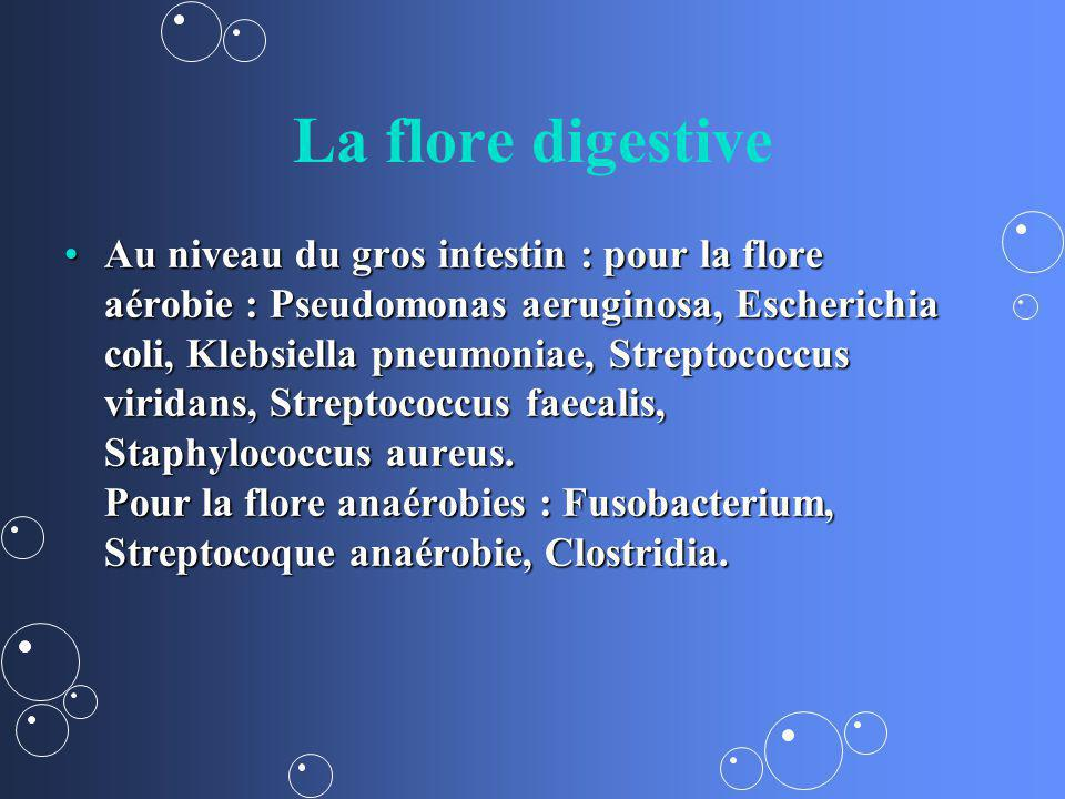 La flore digestive