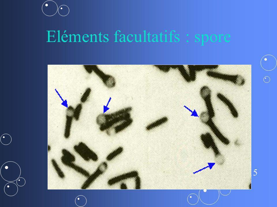 Eléments facultatifs : spore
